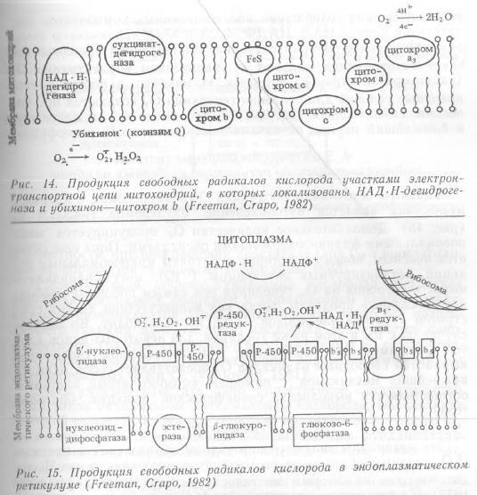 Почему потребность в кислороде в процессе эволюции животных возрастала 186