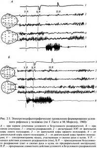 Условия выработки и физиологический механизм временной связи