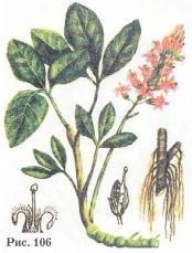Вахта трёхлистная, трилистник водяной, трифоль, золотушная трава, вахта-трава, лихорадочник - Menyanthes trifoliata L.